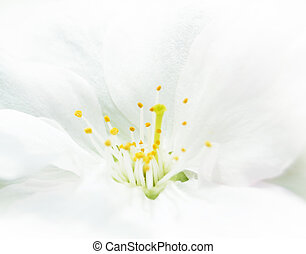 Close Up Image of White Cherry Flower
