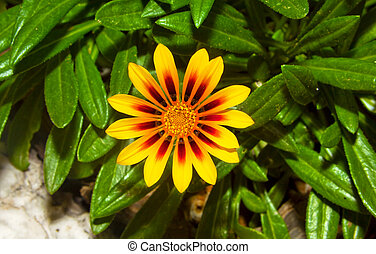 close up image of yellow flower