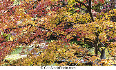 Close up in Hirosaki Castle maple