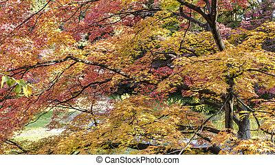 Close up in Hirosaki Castle maple