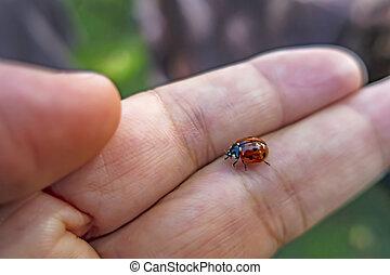 close up ladybird on a hand