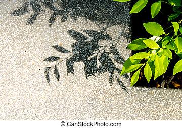 Close up leaf on sidewalk background