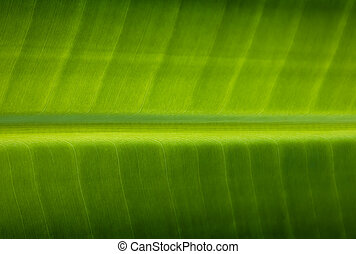 Close up leaves of the banana tree Textured abstract background