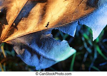 close-up., liść, płytki, upadły, dof.