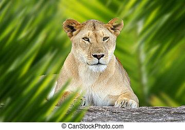 Lion portrait in jungle