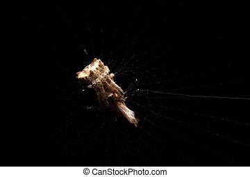 close-up little spider hunter in dark