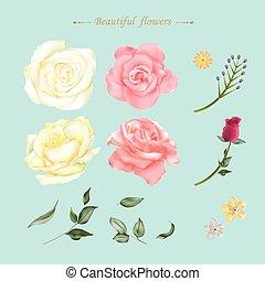 close up look at beautiful roses