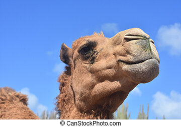Close Up Look Into the Face of a Camel