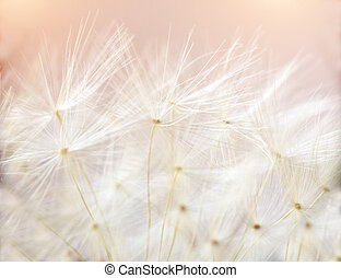 Close up macro image of dandelion seed heads with detailed lace-like patterns.