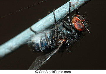 Close Up Macro of a Fly