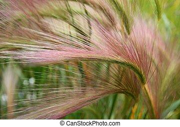 Alaskan grass