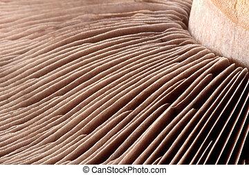 Close-up macro shot of a mushroom stalk and fins