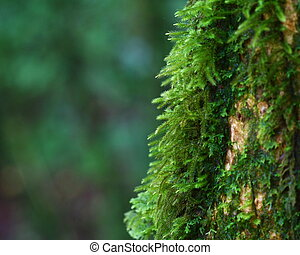 close up moss on tree, Chiang Mai, Thailand