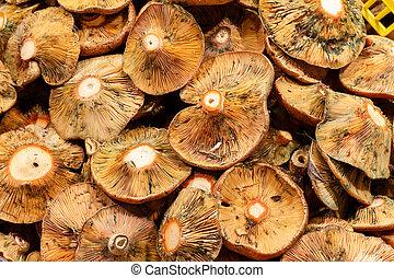 Close up mushroom food market