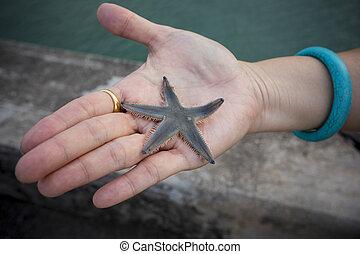 close up natural  marine seastar on woman hand