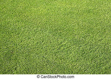 Close up neat cut grass. - Close up of neat cut grass on a...