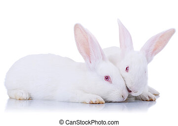 Close up od two cute white rabbits.