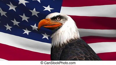 Close-up of a bald eagle on the background of the USA flag.
