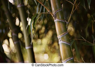 Close-up of a bamboo plant.