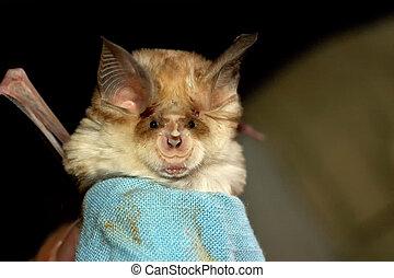Close up of a bat