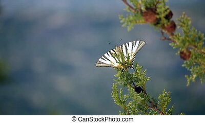 Close-up of a beatiful butterfly flying away from the branch