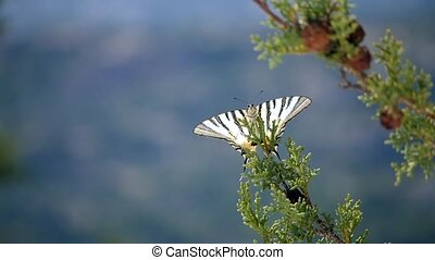 Close-up of a beatiful butterfly sitting on the branch