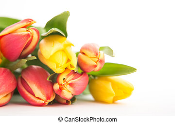 Close up of a beautiful bouquet of tulips on a white background
