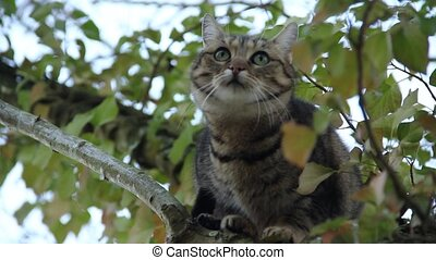 close up of a beautiful domestic cat in a tree