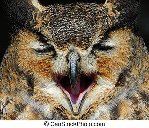 Eagle Owl - close-up of a beautiful Eagle Owl (bubo bubo)