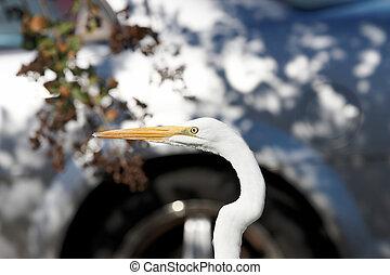 Close up of a birds head