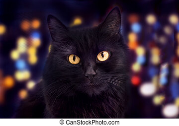 Close up of a black cat looking at camera and bokeh on the background