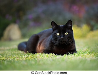 Close up of a black cat lying on the grass
