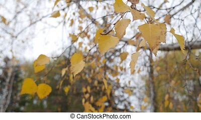 Close-up of a branch with yellow autumn leaves against the background of trees and the sky.