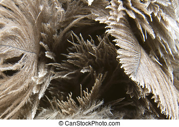 Close up of a brown feather duster