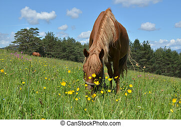 Close-up of a Brown Horse Grazing