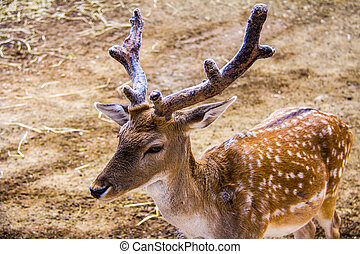 Close-up of a brown young deer standing