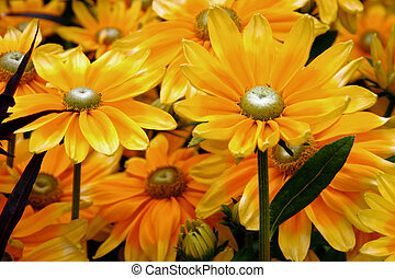 Close-up of a bunch of yellow daisy flowers