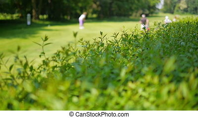 Close up of a bush with golf player in the background