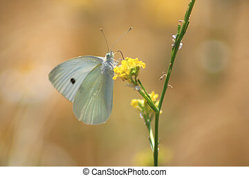 Close-up of a butterfly on a flower