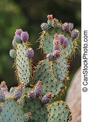 Cactus in Joshua Tree
