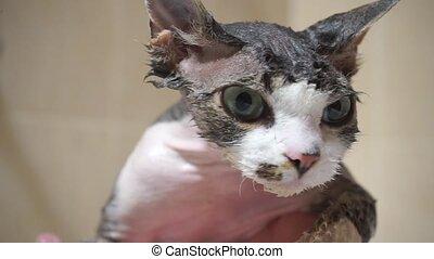 close up of a cat's wet muzzle