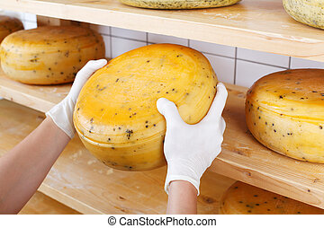 Close-up of a cheesemaker selecting mature cheeses from the...