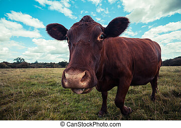 Close up of a cow standing in a field