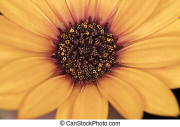 close up of a daisy flower