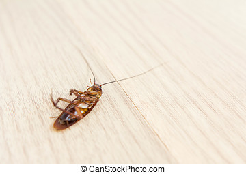 Close up of a death cockroach on wooden floor