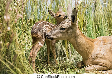 Close up of a deer family
