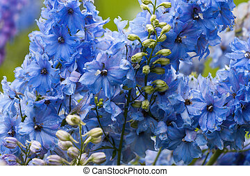 Close-up of a delphinium in garden