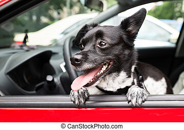 Dog Looking Through Open Car Window