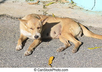 Close up of a dog lying in the sun on the road.