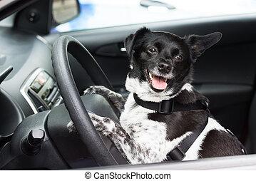 Dog Sitting Inside Car
